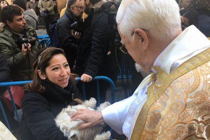 Este miércoles, fiesta de los animales en la iglesia de San Antón