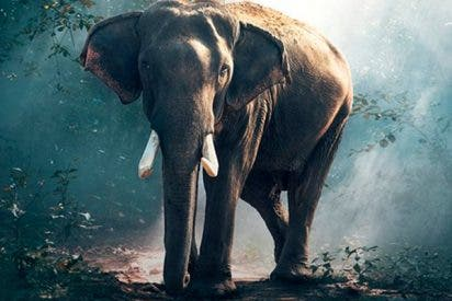 ¿Sabes ante qué animal siente auténtico terror el elefante -y no es el ratón-?