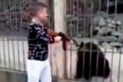 Este sinvergüenza mata con un AK 47 a un indefenso oso tibetano cautivo en un zoo