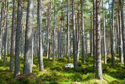 La mano del hombre ha reducido a la mitad los bosques de Europa en sólo 6.000 años