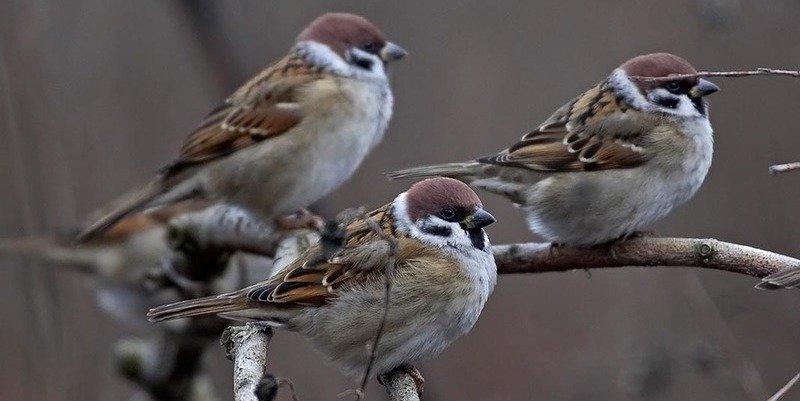 ¿Sabías que el canto de los pájaros encierra información climática?