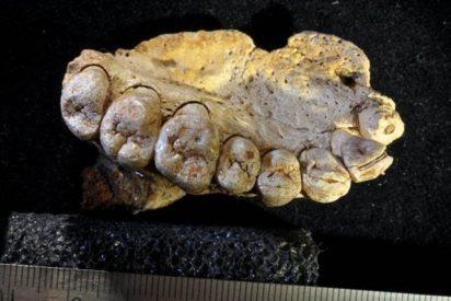 Un fragmento maxilar hallado en Israel sugiere que el Homo Sapiens migró de Africa 60.000 años antes de lo documentado