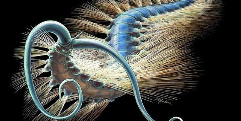 Un gusano de 508 millones de años resuelve el enigma de las lombrices