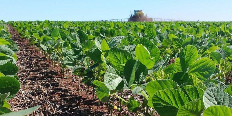 Aclarar las hojas de la soja incrementa su rendimiento