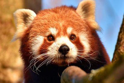 ¿Sabes por qué no necesitamos salvar a las especies en extinción?