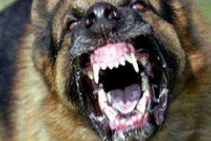 Perros rabiosos callejeros matan a una bebé de 14 meses en la India