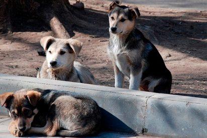 Así custodian estos cuatro perros el cuerpo de su amigo atropellado en una calle