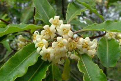 Un árbol invasor se adueña de un santuario de biodiversidad en Jamaica