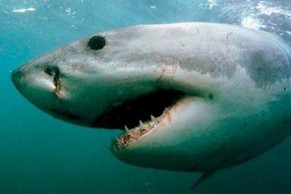 Por los pelos se salva este niño de ser atrapado por los tiburones