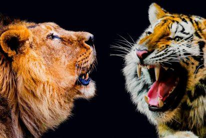 Un tigre y una leona se compinchan para atacar a traición a un caballo en plena función de circo