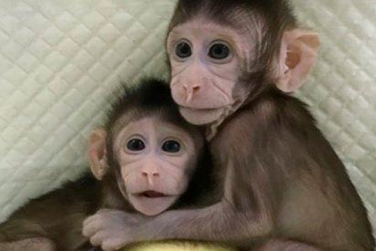 Así son los primeros primates clonados con la técnica de la oveja Dolly