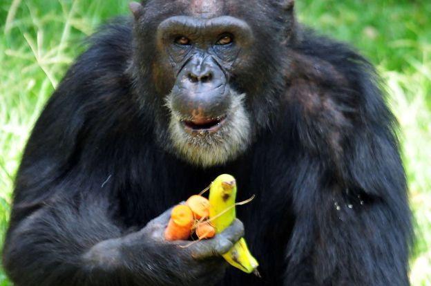 Aves y primates tienen cerebros con células ligadas a la inteligencia