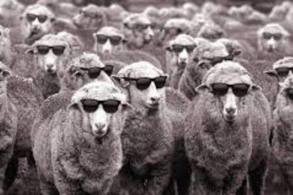 ¿Te atreves con este enigma viral sobre ovejas y cabras?
