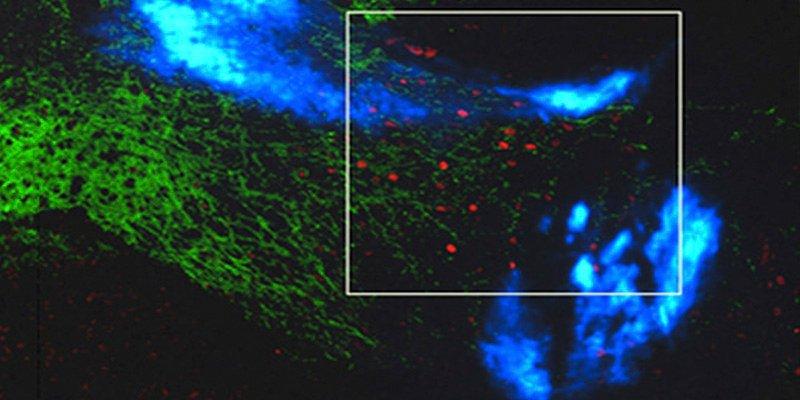 Consiguen estimular las profundidades del cerebro con luz y nanopartículas