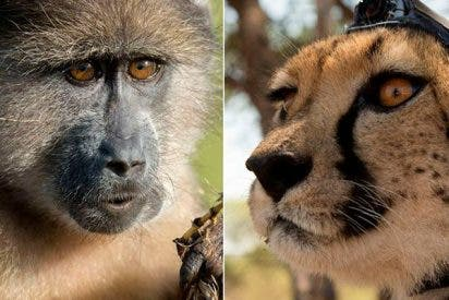 Los increíbles animales fotógrafos filman los secretos de la naturaleza