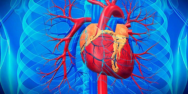 ¿Sabes por qué enferman las arterias?