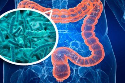 ¿Sabes que la flora intestinal juega un papel primordial en el desarrollo de la esclerosis múltiple?