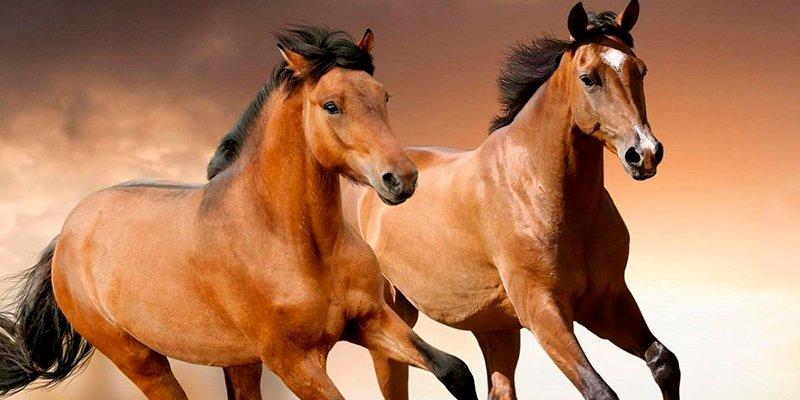 ¿Sabes que ya no quedan caballos salvajes en el mundo?