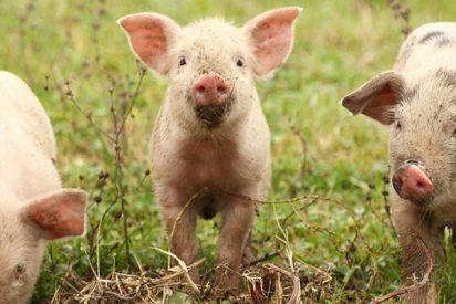 Jordi Évole denuncia el maltrato animal detrás de la carne que comemos