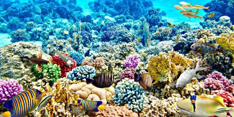 La acidez del océano ha empezado a erosionar los arrecifes de coral