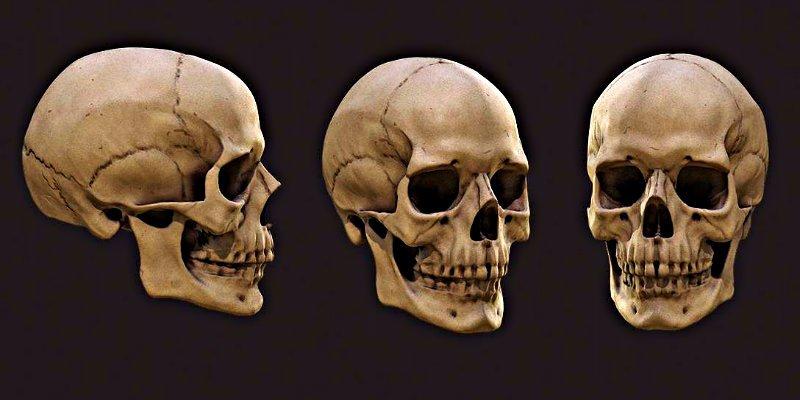 El misterio de la tumba sumergida hace 8.000 años con cráneos clavadas en postes