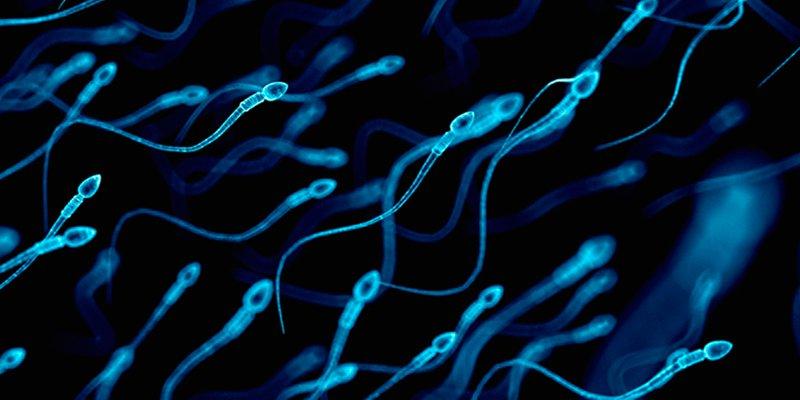 ¿Sabías que el estrés podría alterar el esperma y afectar a tu descendencia?