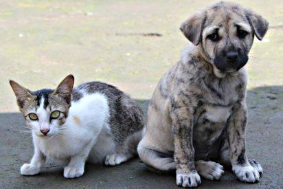 Las 10 cosas que no sabías sobre los gatos