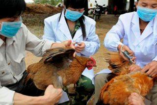 ¿Sabes por qué en China el virus de la gripe aviar está mutando?