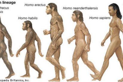 """""""El término 'homo erectus' debería utilizarse sólo para los fósiles encontrados en Asia"""""""