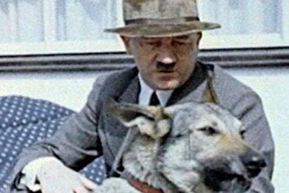 ¿Sabes cómo y por qué mató Hitler a su amada perra y a sus cachorros?