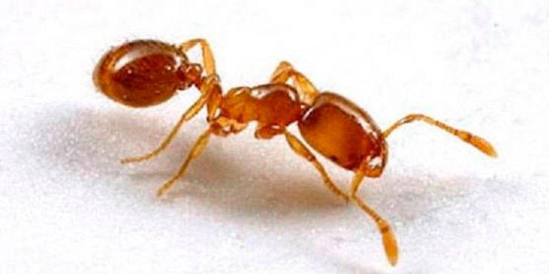 ¿Sabes qué insectos podrían ser una futura fuente de antibióticos para combatir infecciones?