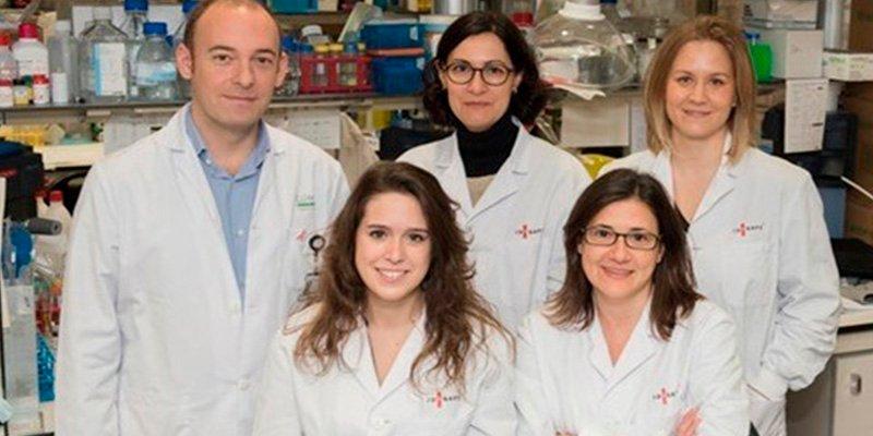 Descubren la implicación de una proteína en la resistencia a la radioterapia del glioblastoma