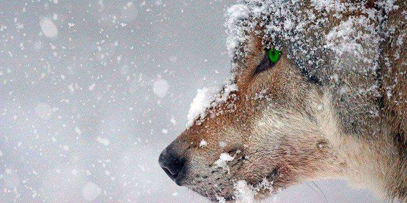 El extraño fenómeno que ha hecho que la temperatura en Siberia suba 37 grados en dos semanas