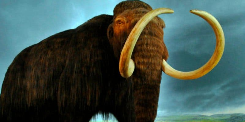 Estos son los 8 animales ya extinguidos que nunca volveremos a ver