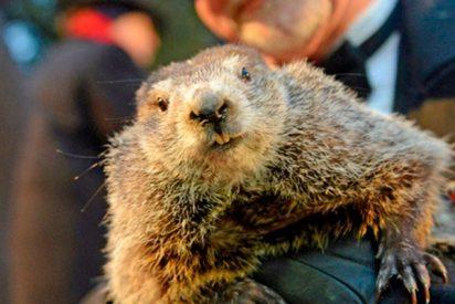 La marmota Phil amarga a los americanos prediciendo seis semanas más de invierno
