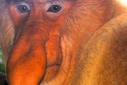 ¿En qué influye tener una nariz más grande para tener éxito sexual?