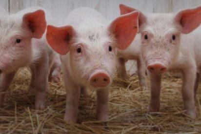 Evole y 'Salvados' le montan una crisis de 'cerdo y muy señor mío' a embutidos El Pozo