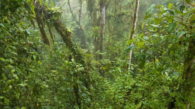 Flora: La raíz fue clave para la propagación global de las plantas