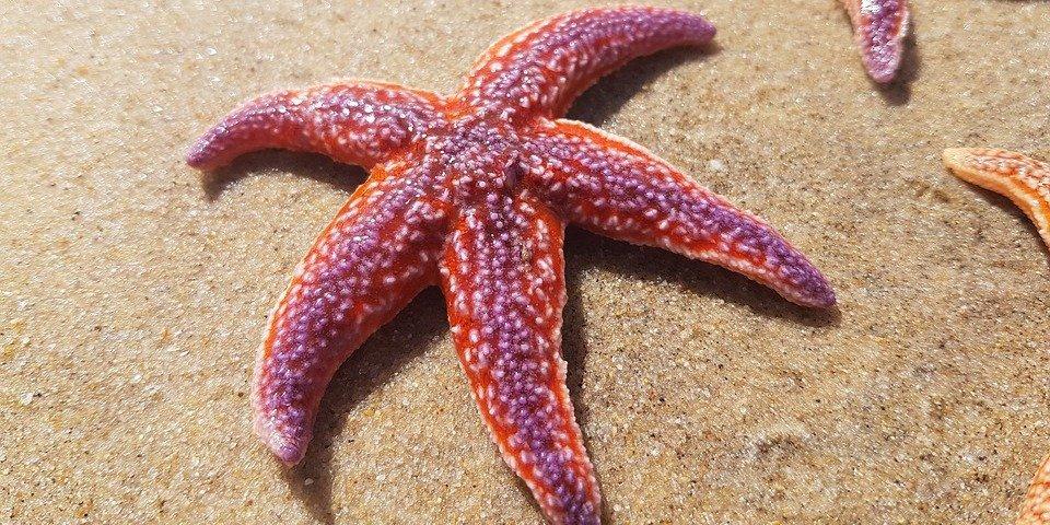 Hay estrellas de mar en el fondo oscuro del océano que tienen ojos y brazos
