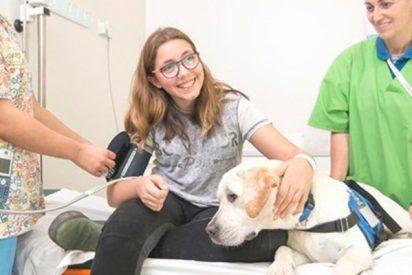 ¿Sabías que la terapia con animales puede mejorar el estado de los niños hospitalizados?