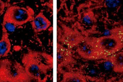 Potencial tratamiento del párkinson en ratones