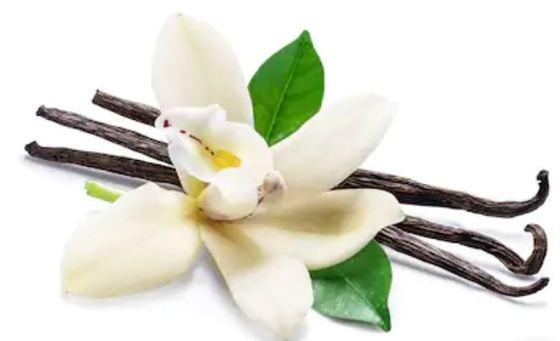 vainilla-Perfumes de hombre más vendidos en Amazon