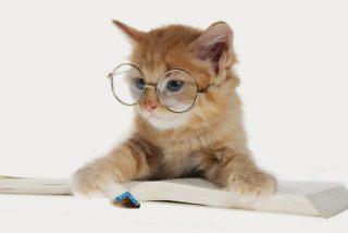Los gatos no saben matématicas y son tan zopencos como los perros