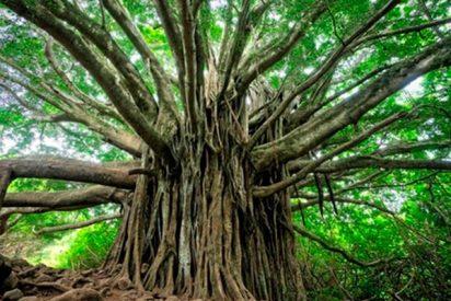 Así es el árbol genealógico que conecta a 13 millones de personas
