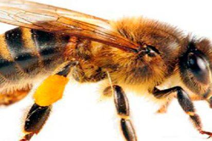 Mujer muere tras una sesión de acupuntura con abejas vivas