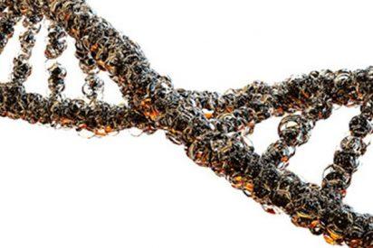 Logran ver y manipular simultáneamente una única molécula de ADN