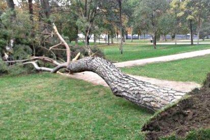 Muere un niño de cuatro años aplastado por un árbol en el parque de El Retiro de Madrid