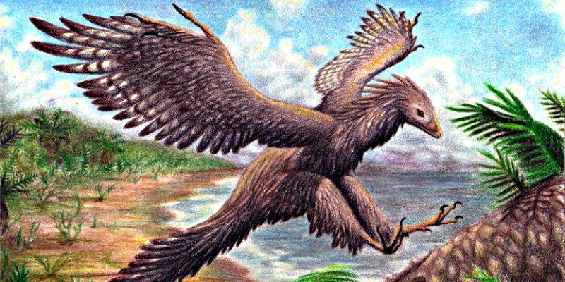 El 'Archaeopteryx' volaba y prueba que las aves descienden de los dinosaurios