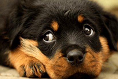 ¿Sabes cómo se calcula la edad de los perros?
