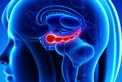 ¿Sabías que el hipocampo humano adulto no genera nuevas neuronas?